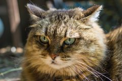 Portrait of a cat close-up. Striped looking at the camera on the street stock images