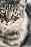 Portrait of Cat stock photography