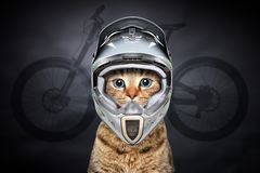Portrait of a cat in cycling helmet stock photography