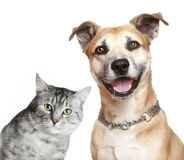 Portrait of a cat and dog Royalty Free Stock Photography