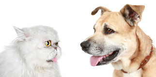 Portrait of a cat and dog Stock Image