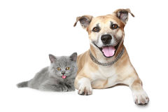 Portrait of a cat and dog Stock Photo