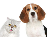 Portrait of a cat and dog Royalty Free Stock Photos