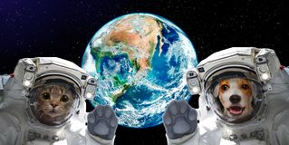 Portrait of a cat and dog astronauts on the background of the globe. Elements of this image furnished by NASA royalty free stock photo