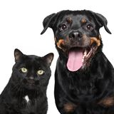 Portrait of cat and dog on white Stock Images