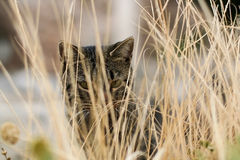 Portrait of a cat in the dry grass Royalty Free Stock Photography