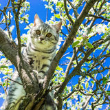 Portrait of a cat on a flowering tree Royalty Free Stock Photo