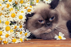 Portrait of cat with flowers Stock Images