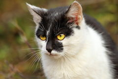Portrait of a cat in the garden Stock Image