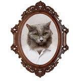 Portrait of a cat of the gentleman Royalty Free Stock Images