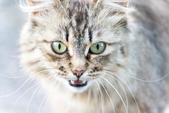 Portrait of cat with green eyes Royalty Free Stock Images