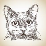 Portrait of cat Stock Photos