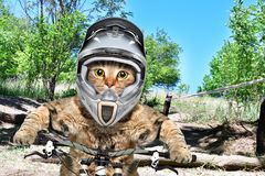 Portrait of a cat in a helmet on a bicycle royalty free stock photography