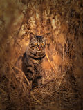 Portrait of a cat. I saw the cat in relaxing behind some bushes, and in completely hidden walk, I captured his portrait Royalty Free Stock Image