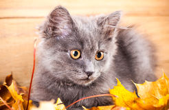 Portrait cat isolated Royalty Free Stock Photo