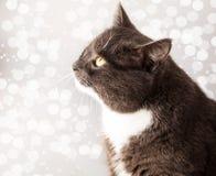 Portrait of cat licks Stock Photos