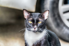Portrait of cat looking at camera Stock Images