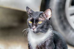 Portrait of cat looking at camera Stock Photos