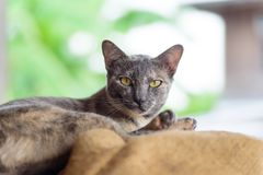 Portrait of cat looking the camera. Cute animal and pet Stock Image