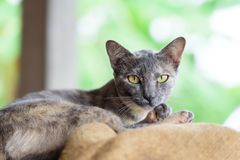 Cute cat looking the camera. Portrait of cat looking the camera, cute animal and pet Stock Images