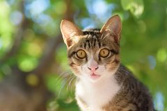 Portrait of cat looking at camera. Cute animal and pet Royalty Free Stock Photo