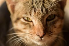 Portrait of cat looking at camera. Cute animal and pet Stock Image