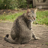 Portrait of cat. Royalty Free Stock Images