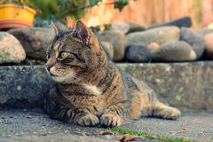 Portrait cat. Cat lurking at the lake Stock Photography