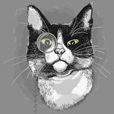 Portrait of a cat in a monocle. Stock Photography