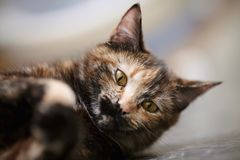 Portrait of the cat of a multi-colored color Royalty Free Stock Photos