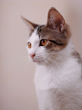 Portrait of a cat. Royalty Free Stock Photos