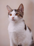 Portrait of a cat. Royalty Free Stock Photo