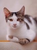 Portrait of a cat. Stock Photos