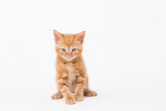 Portrait of cat over white background Stock Photos