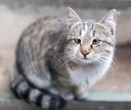 Portrait of a cat on the porch.  Stock Photos