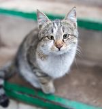 Portrait of a cat on the porch.  Stock Image