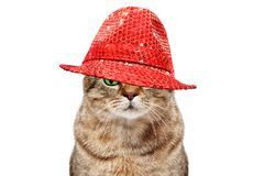 Portrait of a cat in a red hat stock photography