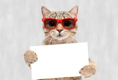 Portrait of a cat in red sunglasses with a banner in paws stock photography