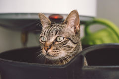 Portrait of a cat Royalty Free Stock Images