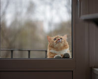 Portrait of cat with sad eyes behind the glass door. Cat with sad eyes behind the glass door Royalty Free Stock Photos