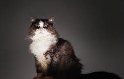 Portrait Of Cat Sitting Stock Photo