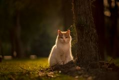 Portrait of cat sitting by a tree in a garden in a green city park on a green background, backlit from the sun royalty free stock image