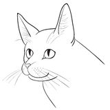 Portrait of a cat Royalty Free Stock Photography