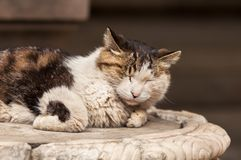 Portrait of a Cat sleeping on marble pedestal stock photo