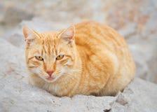 Portrait of cat Stock Photography