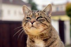 Portrait cat Stock Image