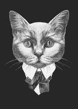 Portrait of Cat in suit. Stock Images