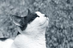 Portrait of the cat. Portrait of white and black cat on leaves background Stock Photography