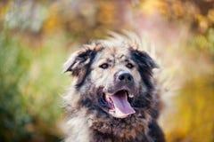 Portrait caucasien de berger Image stock
