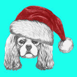 Portrait of Cavalier King Charles Spaniel with Santa Hat. Royalty Free Stock Photo